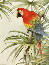 Parrot LIGHT SWITCH PLATE animal theme colorful home decor {{ NEW }} ships Free