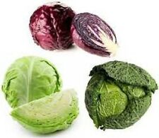 Heirloom Cabbage Vegetable Seed-NON-GMO 10 kinds Savory,Flat,Round,Red,Green