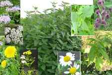 NATIVE wild flowers, plants, well deweloped roots, seedlings. Medicinal herbs MI