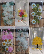 Dry Pressed flower phone case for iPhone 4 4s 5 5s 5c 6 6plus&Samsung S5 S6 Gift