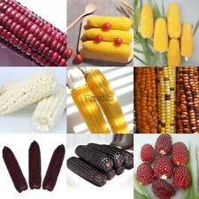 10 Particle Popcorn/Sweet/Pineapple/Strawberry Corn Seeds Vegetable Seeds MSF