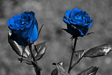 Blue Roses   CANVAS OR PRINT WALL ART
