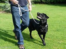 Extra Long 2M Very Strong Dog Training Rope Slip Lead Stop Pulling Gundog Leash
