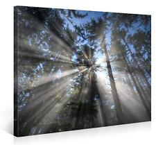 Stretched Canvas Print - MAGICAL FOREST Large Nature Wall Art s3713