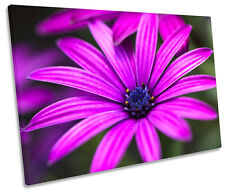 Floral Daisy Flower Petals SINGLE CANVAS WALL ART Picture Print