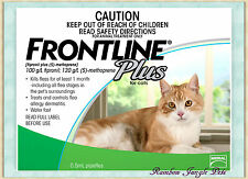 Frontline Plus For Cats 3 pack 6  pack