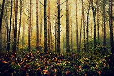 Stunning Forest Trees In Autumn - Landscape Wall Art Various Size Canvas Prints