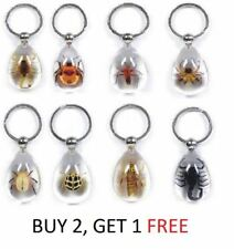 Clear Real Insect Key Ring Chain Lucky Charm Scoprion Spider Beetle Bug Specimen