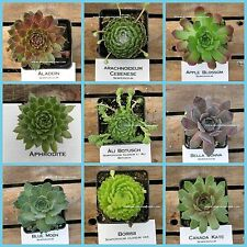 SEMPERVIVUM,  HENS AND CHICKS,CHOOSE YOUR FAVORITE #AC1, Winter hardy plants