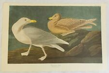 The Birds of America. Audubon. Burgomaster Gull. Amsterdam Edition.