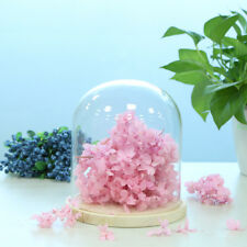LED Lights Ornaments Dried Flowers Display Glass Cover Dome With Wood Base