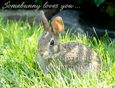 Bunny rabbit photo note card with Love text, Love greeting card blank inside