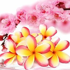 Pink Frangipani Blossoms Fragrance Oil Candle/Soap Making, Oil Burners, Diffuser