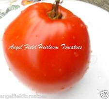 Granny's Heart Heirloom Tomato Seeds 20 Organic Garden Angel Vegetable Seeds
