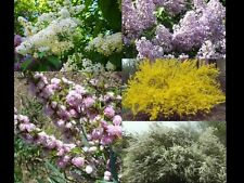 Spring collection, flowering landscape perennial shrubs, plants and cuttings