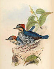 New Vintage John Gould Art Print or Poster #11 Repro Birds Giclee Archival Inks