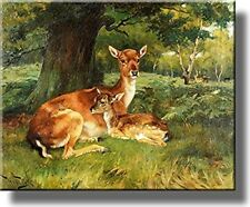 Fallow Deer Beside a Tree Picture on Stretched Canvas, Wall Art Decor, Ready to