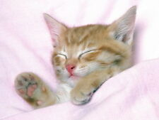 D0890 Cute Sleeping Kitten Funny Cat Animal Wall Print POSTER CA