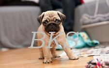 Beautiful Puppy DOG Digital Picture-Desktop Wallpaper-Wildlife / Email Sent Only
