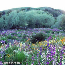 SouthWest  Annual/Perennial Wildflower Seed Mix