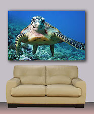 "Turtle underwater, under sea  Huge canvas print, 30"" x 40"", wall art decoration"