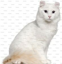 American Curl Cat ~ Frosting Sheet Cake Topper ~ Edible Image ~ D6438
