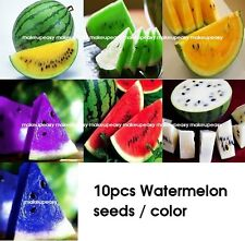 10pcs Rare Watermelon Seeds Delicious Fruit Vegetables Seed 7 Colors Available