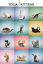 Yoga Kittens Collage Poster 61x91.5cm