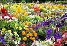 British FLOWER SEEDS 2.500 seed plant mix pack Annual Perennial Wild bee scented