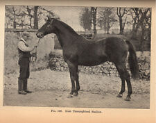 THE ORIGIN AND INFLUENCE OF THE THOROUGHBRED HORSE, Sir William Ridgeway, 1905