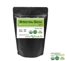 Sprouting Seeds, ORGANIC Wheatgrass SPROUTING Seeds, High germination %