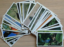 Brooke Bond-Natural Neighbours-40 Cards-Wildlife-LAMINATED-Individual-1992