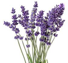 Lavender 100% Pure Therapeutic Grade Essential Oil 5ml to 1 Gallon You Pick Size