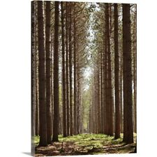Premium Thick-Wrap Canvas Wall Art entitled Grove of tall pine trees
