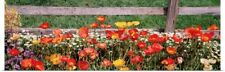Poster Print Wall Art entitled Close-up of flowers growing near a fence