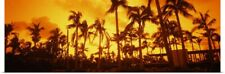 Poster Print Wall Art entitled Palm trees on the beach, The Setai Hotel, South