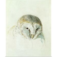 Poster Print Wall Art entitled White Barn Owl, from The Farnley Book of Birds,