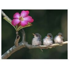 Poster Print Wall Art entitled Cute small birds on tree branch looking at pink