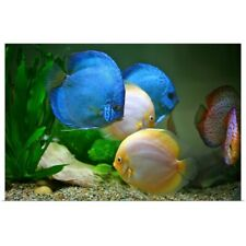 Poster Print Wall Art entitled Tropical Fish in water.