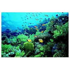 Poster Print Wall Art entitled Tropical fish swimming over reef