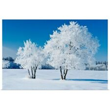 Poster Print Wall Art entitled Field With Frost Covered Trees, Birds Hill