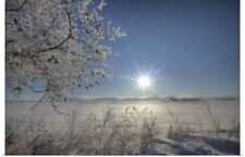 Poster Print Wall Art entitled Frost Covered Trees On Winter Morning, Alberta,