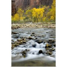 Poster Print Wall Art entitled Autumn along the Virgin River in Zion Canyon,