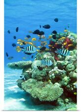 Poster Print Wall Art entitled Underwater photo of tropical fish on coral reef,