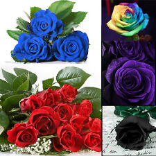 100Pcs Multi-color Flower Plant Seeds Holland Rose Seeds Lover Gift Home Garden