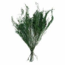 Large Bundle of Dried Natural Moss Greenery!  Preserved Grass Foliage