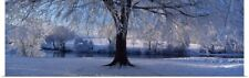 Poster Print Wall Art entitled Winter Trees Perkshire Scotland