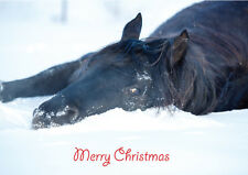 Christmas Cards Equestrian Horse Pony Unique Cards 10 Pack A5 Size