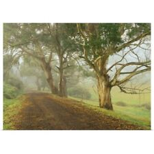 Poster Print Wall Art entitled Morning mist and Mountain Ash near Timboon,