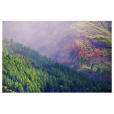 Poster Print Wall Art entitled Pine trees in the morning light